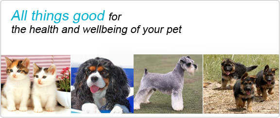 Buy Healthy Pet Food